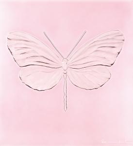 Eternal_Hope_Rose-Pink